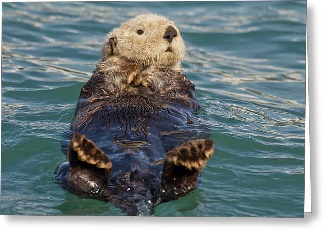Prince William Sound, Alaska, Sea Greeting Card
