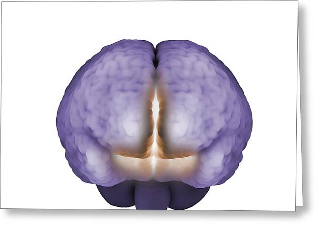 Psychic Brain, Conceptual Image Greeting Card by Science Photo Library