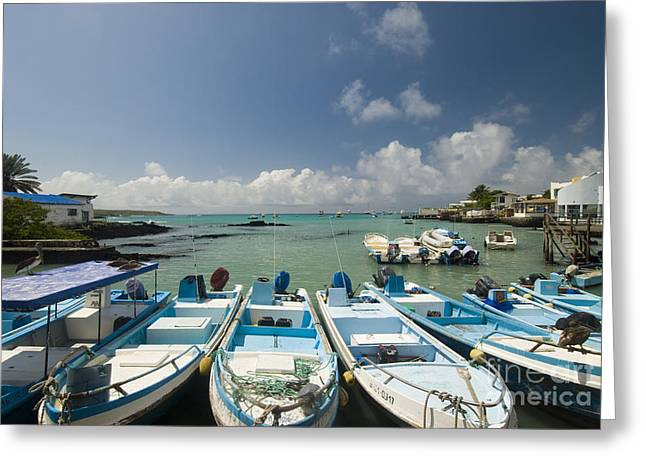 Puerto Ayora Greeting Card by William H. Mullins