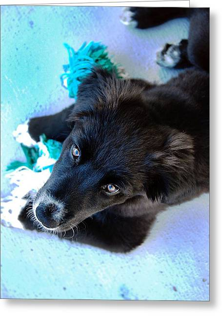 Puppy In Blue Greeting Card by Natalie Lise Harvey
