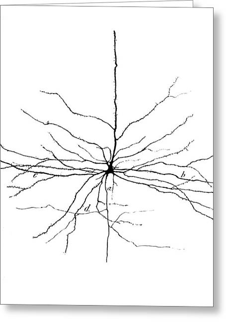 Pyramidal Cell In Cerebral Cortex, Cajal Greeting Card