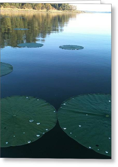 Rayburn Lilly Pads Greeting Card
