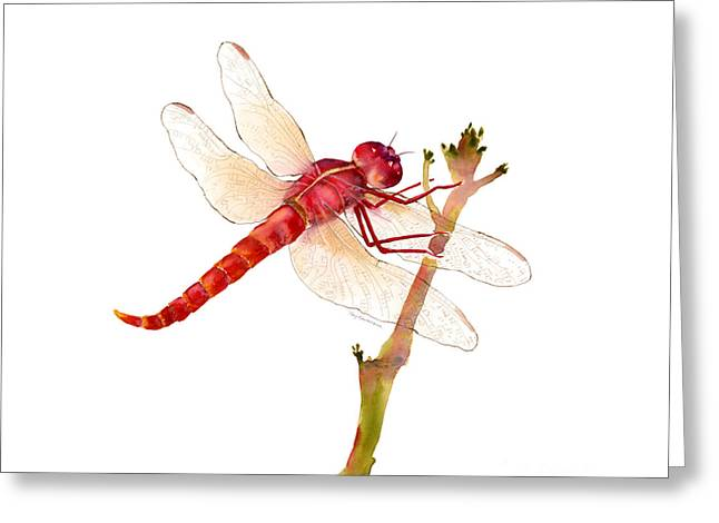 Red Dragonfly Greeting Card by Amy Kirkpatrick