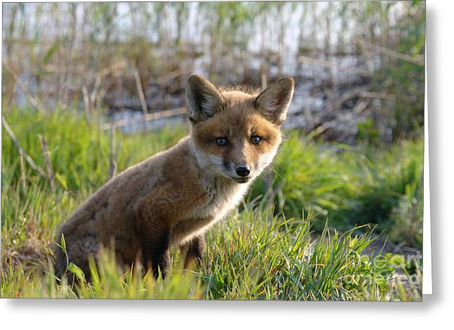 Red Fox Kit Greeting Card by Olivier Le Queinec