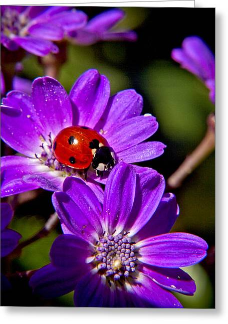Red Lady In Lavender Greeting Card