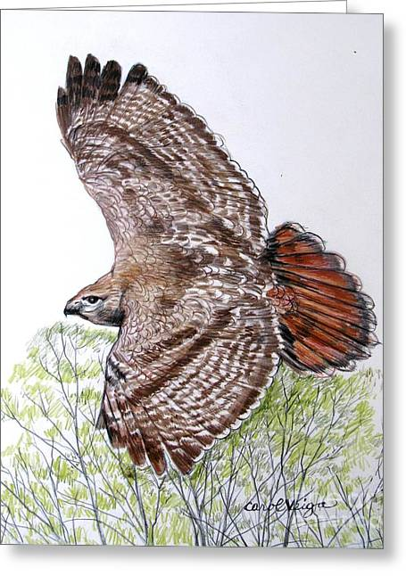 Red-tailed Hawk Greeting Card by Carol Veiga