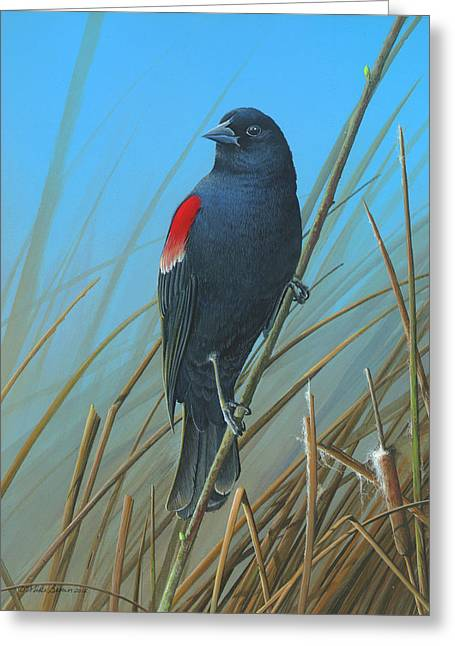 Red-winged Black Bird Greeting Card