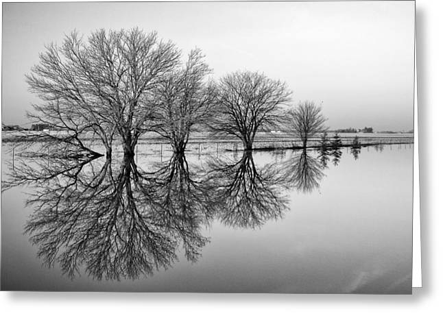 Reflection Greeting Card by Tom Druin