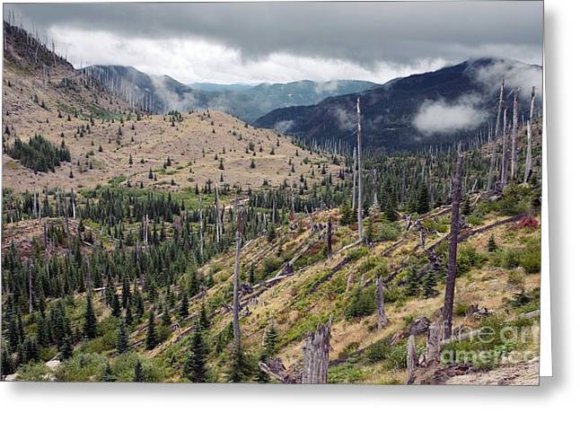Regenerating Forest, Washington, Usa Greeting Card by Bob Gibbons