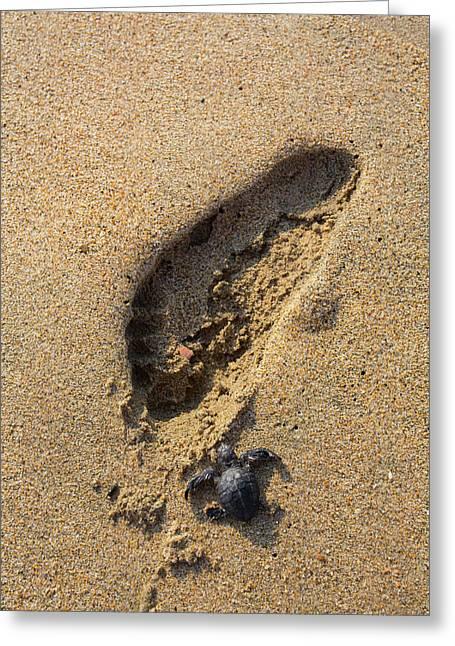 Releasing Green Sea Turtle, Hotelito Greeting Card by Douglas Peebles