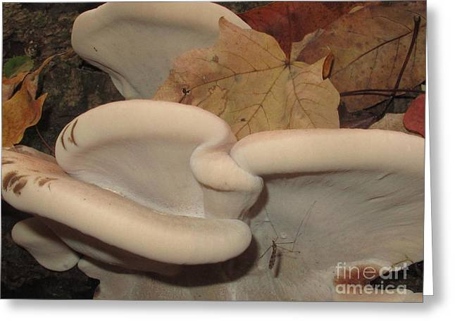 Resinous Polypore Greeting Card by Timothy Myles
