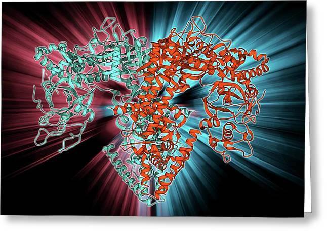 Rna-dependent Rna Polymerase Molecule Greeting Card
