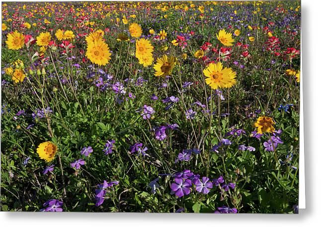 Roadside Wildflowers In Texas, Spring Greeting Card