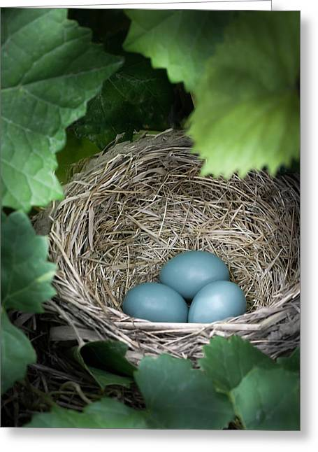 Robin Egg Blues Greeting Card by James Barber