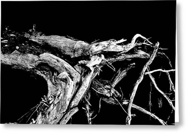 Greeting Card featuring the photograph Roots 1 by Amar Sheow