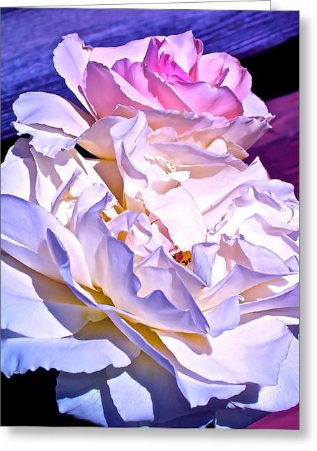 Rose 58 Greeting Card by Pamela Cooper