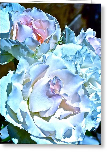 Rose 61 Greeting Card