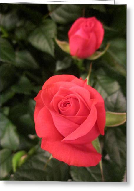 Roses In Red Greeting Card