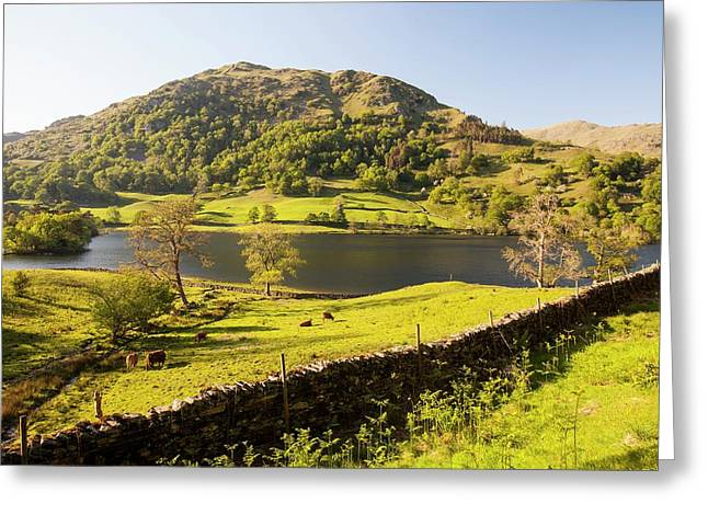 Rydal Water In Spring Greeting Card by Ashley Cooper