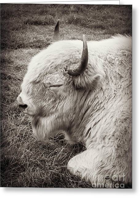 Sacred Buffalo Greeting Card