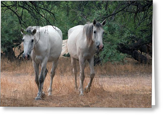 Salt River Wild Horse Greeting Card