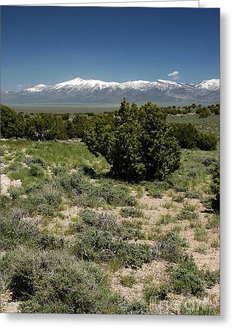 614p Schell Creek Range Nv Greeting Card