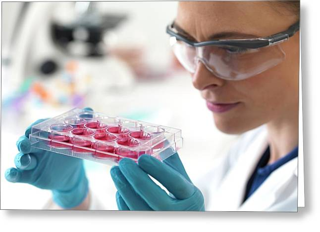 Scientist Holding Stem Cells Greeting Card by Tek Image
