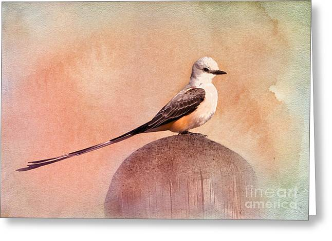 Scissor-tailed Flycatcher Greeting Card by Betty LaRue