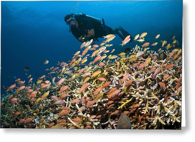 Scuba Diving, Indonesia Greeting Card