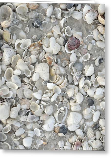 Sea Shells On Marco Island Greeting Card