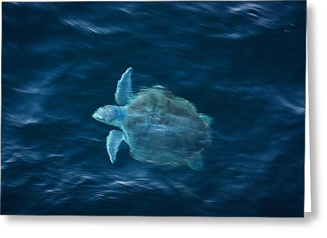 Sea Turtle Greeting Card by Tammy Schneider