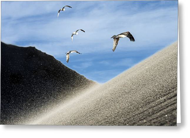 Seagulls Greeting Card by Michael Mogensen