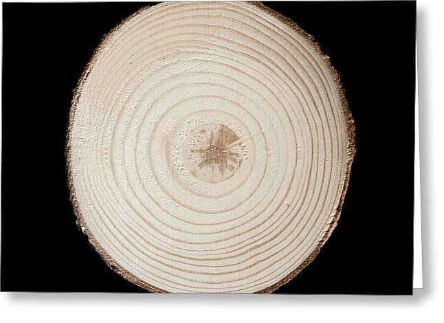 Section Through Red Pine Trunk Greeting Card by Science Photo Library