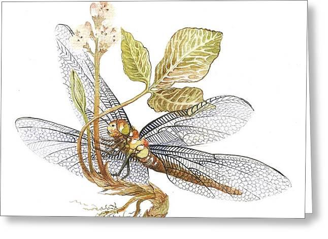 Sheer Wings / Sold Greeting Card