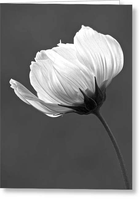 Simply Beautiful In Black And White Greeting Card by Penny Meyers