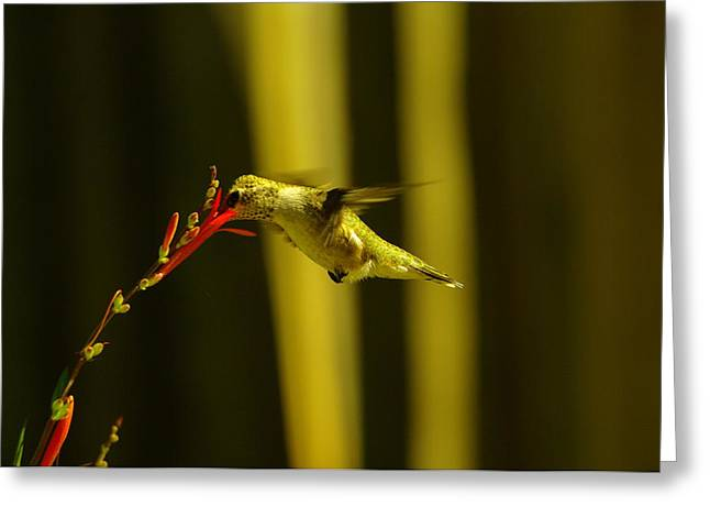 Sipping Nectar Greeting Card by Jeff Swan