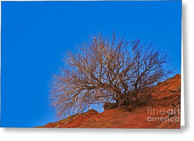 Slickrock Formation Greeting Card by David Davis