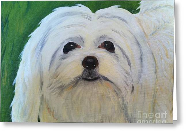 Greeting Card featuring the painting Snowball - Maltese Shih Tzu by Shelia Kempf