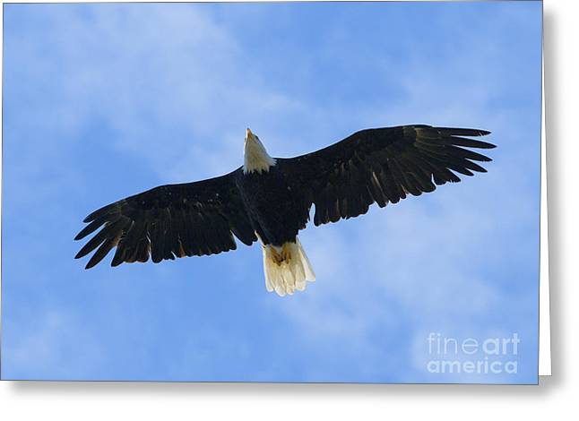 Soaring High 2 Hdr Greeting Card by Sharon Talson