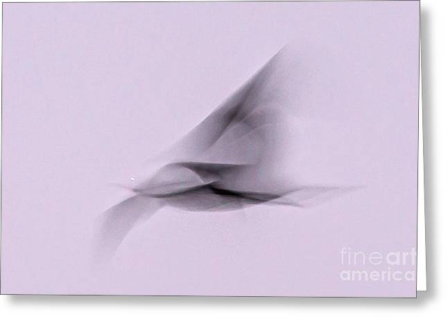 Soaring Shadow Greeting Card