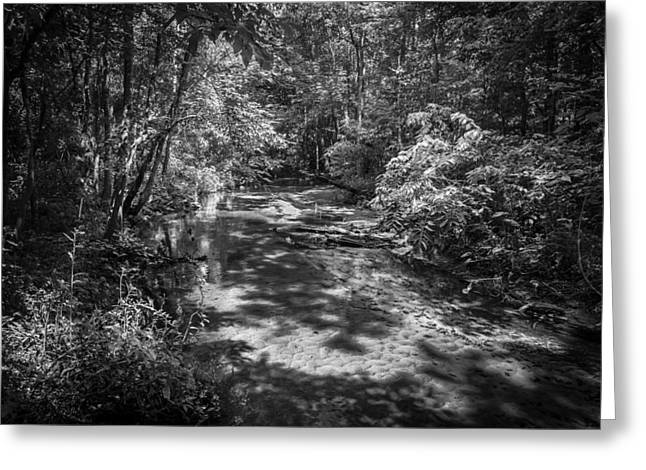 Soldiers Creek Seminole County Florida  Bw Greeting Card by Rich Franco
