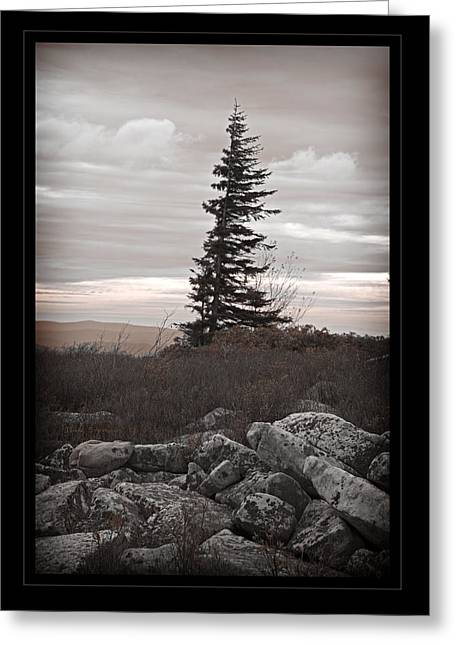 Solitary Solitude Greeting Card by John Stephens