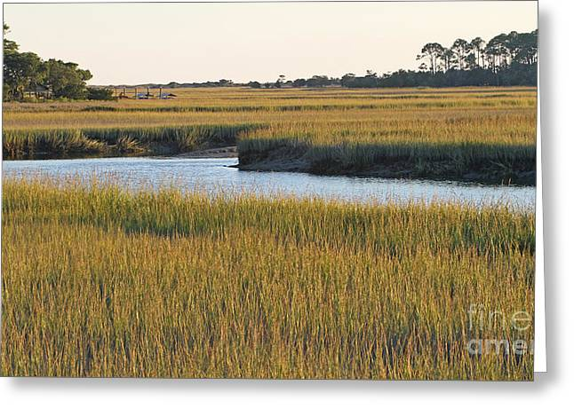 South Carolina Salt Marsh Greeting Card