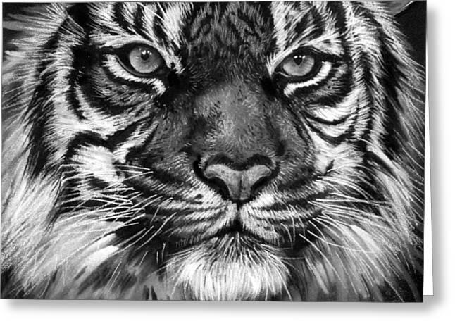 South China Tiger Greeting Card