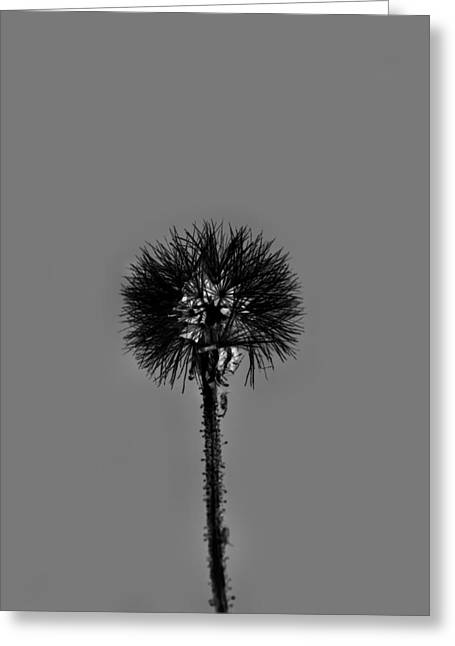Spring Dandelion Greeting Card by Tommytechno Sweden