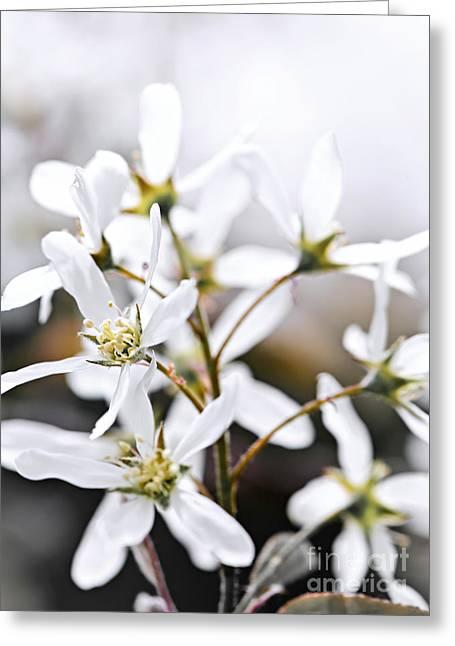 Spring Flowers Greeting Card by Elena Elisseeva