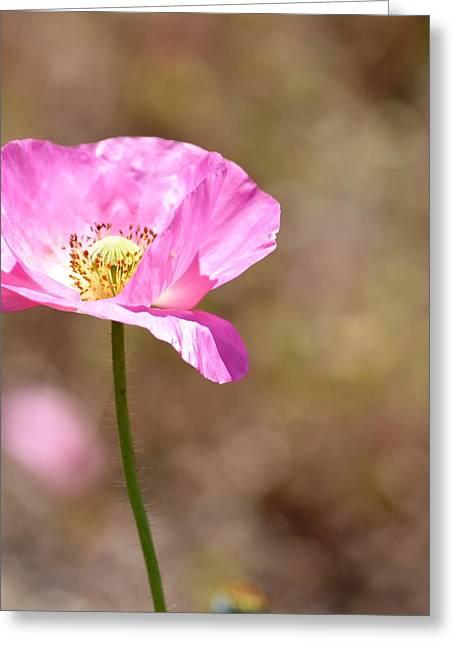 Spring Poppy Flower Greeting Card