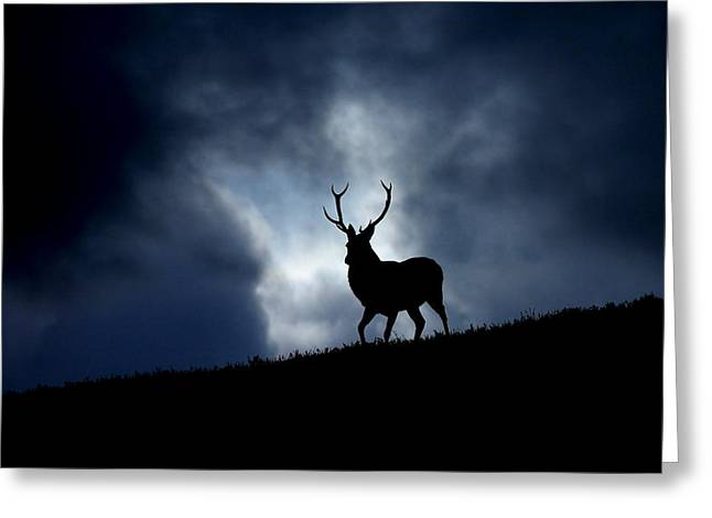 Stag Silhouette Greeting Card