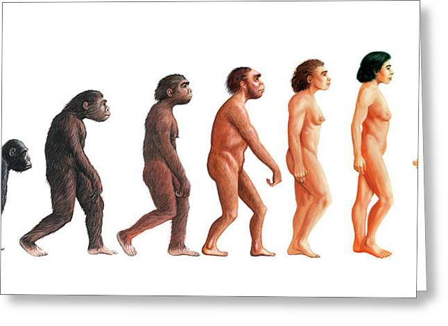 Stages In Human Evolution Greeting Card