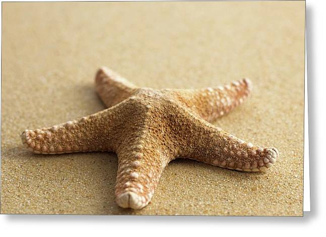 Starfish On Sand Greeting Card by Science Photo Library
